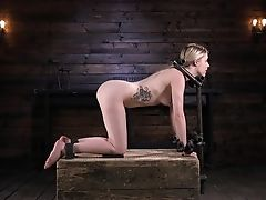 BDSM, Blonde, Bondage, Fetish, Pain, Seduction, Spanking, Submissive, Teen, Torture,